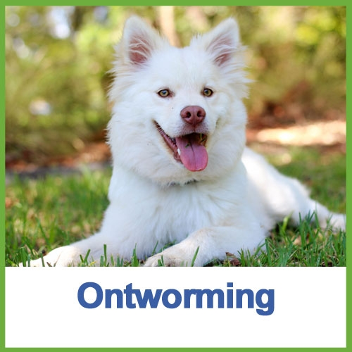 Ontworming hond