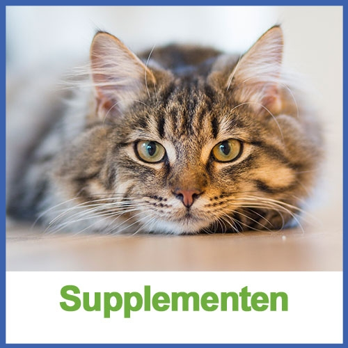 supplementen kat